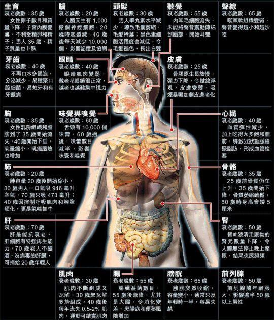 人體器官衰老退化時間表