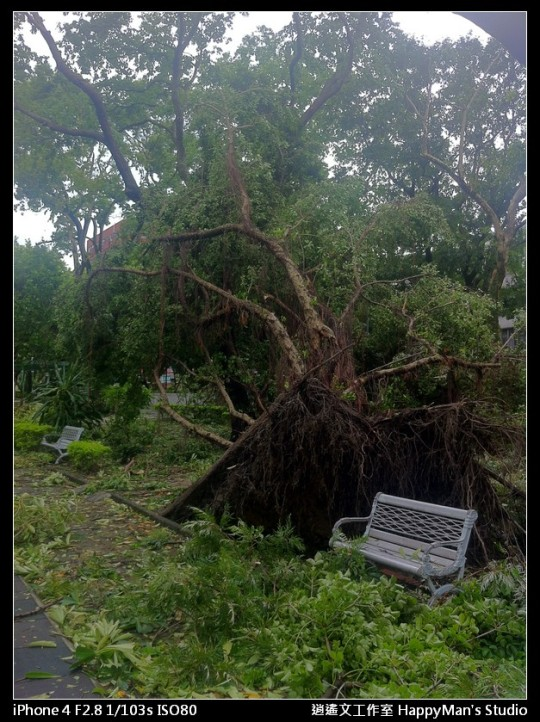 被蘇力颱風掃過的校園 (16)