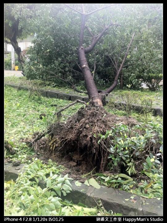 被蘇力颱風掃過的校園 (9)