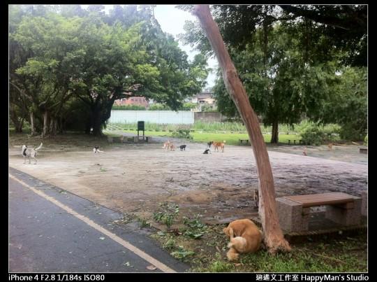 被蘇力颱風掃過的福和河堤 (11)