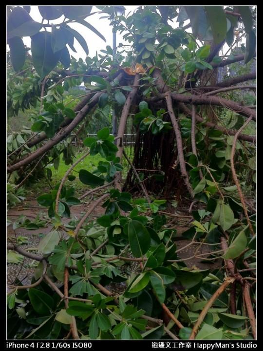 被蘇力颱風掃過的福和河堤 (26)
