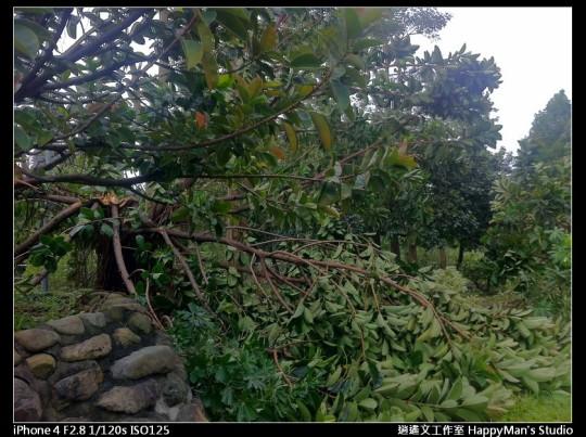 被蘇力颱風掃過的福和河堤 (27)