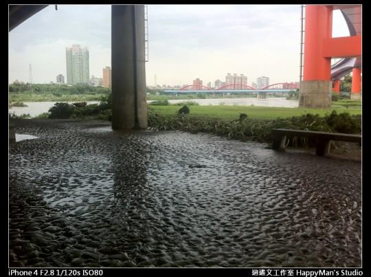 被蘇力颱風掃過的福和河堤 (37)