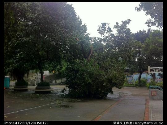 被蘇力颱風掃過的福和河堤 (49)