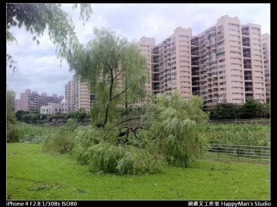 被蘇力颱風掃過的福和河堤 (7)
