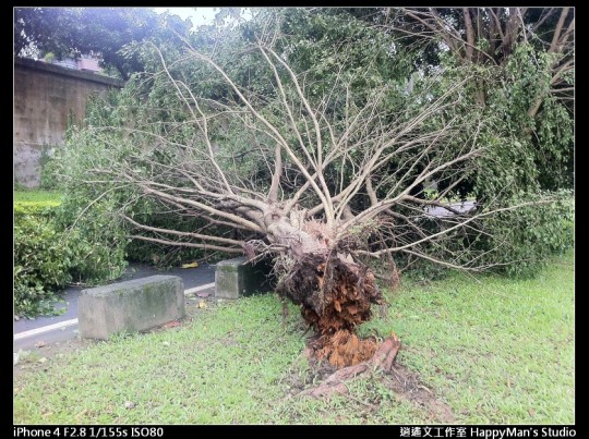 被蘇力颱風掃過的福和河堤 (9)