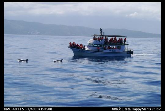 花蓮花蓮 鯨世界賞鯨 (11)