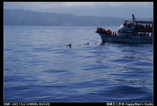 花蓮花蓮 鯨世界賞鯨 (12)