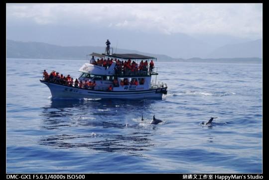 花蓮花蓮 鯨世界賞鯨 (13)