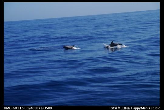 花蓮花蓮 鯨世界賞鯨 (14)