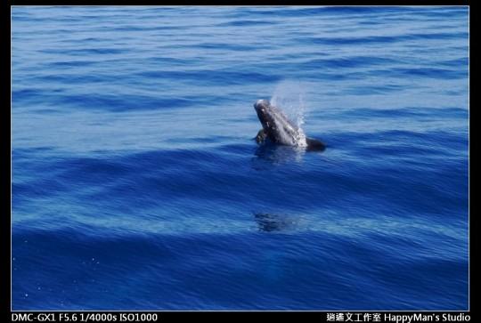 花蓮花蓮 鯨世界賞鯨 (15)