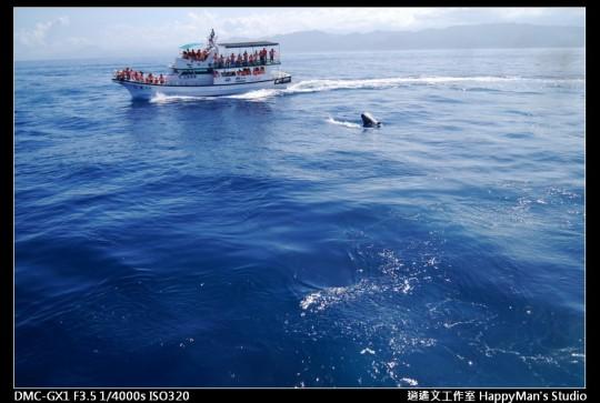 花蓮花蓮 鯨世界賞鯨 (16)