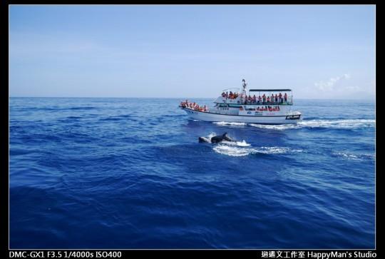 花蓮花蓮 鯨世界賞鯨 (17)