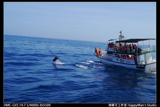 花蓮花蓮 鯨世界賞鯨 (19)