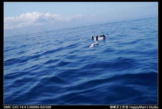 花蓮花蓮 鯨世界賞鯨 (20)