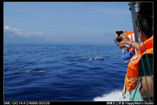 花蓮花蓮 鯨世界賞鯨 (21)