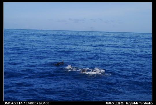 花蓮花蓮 鯨世界賞鯨 (23)