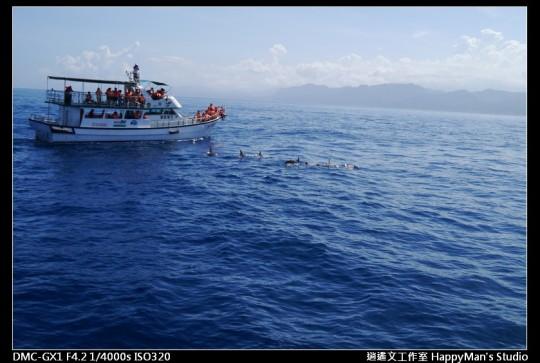 花蓮花蓮 鯨世界賞鯨 (25)
