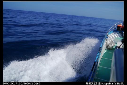 花蓮花蓮 鯨世界賞鯨 (26)