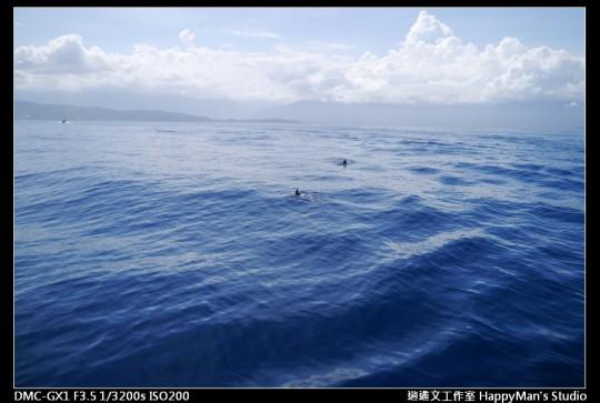 花蓮花蓮 鯨世界賞鯨 (7)